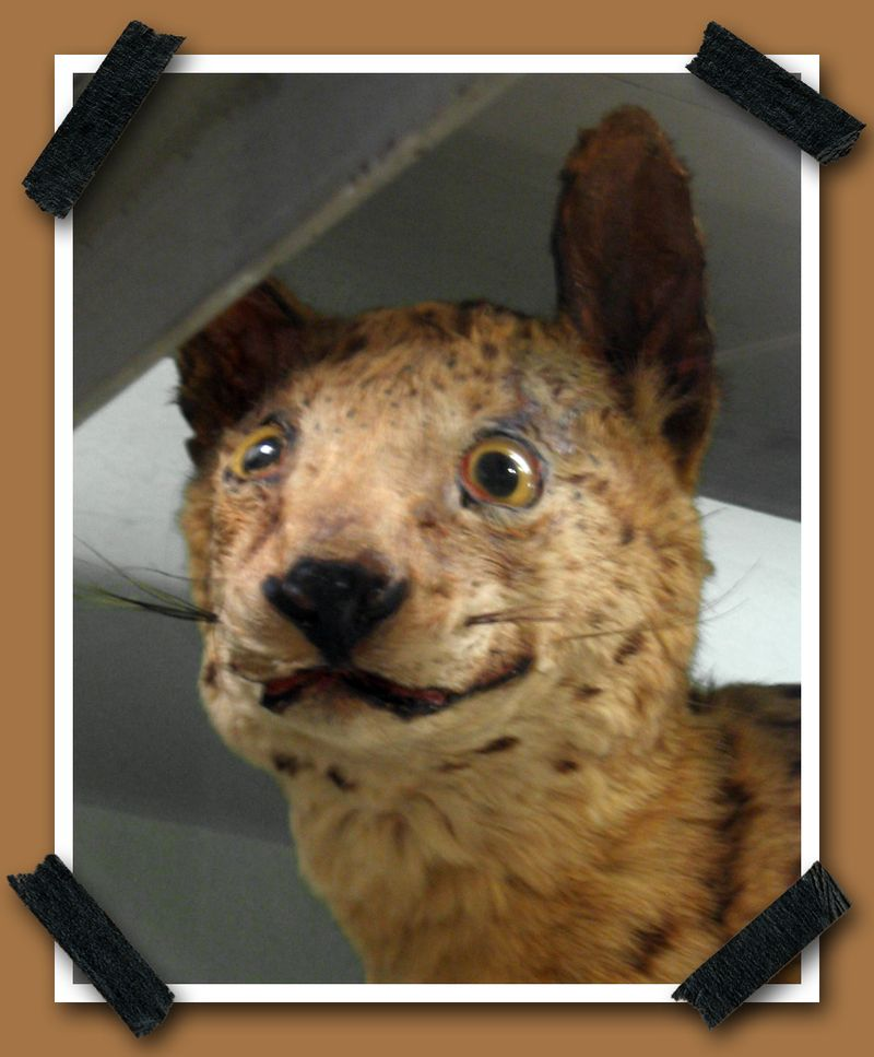 Taxidermy 2