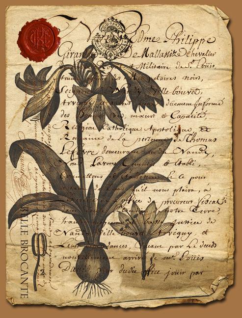 Antiq Script Botanical