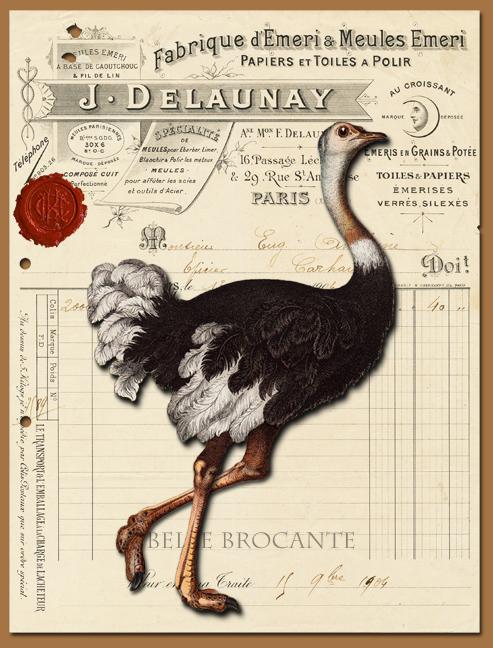 Ostrich Collage 2