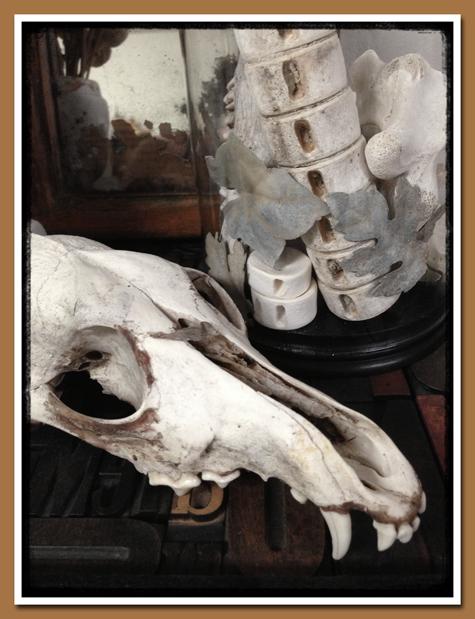 Crâne 5