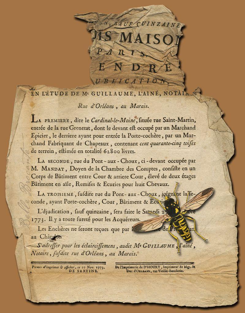 Wasp Text