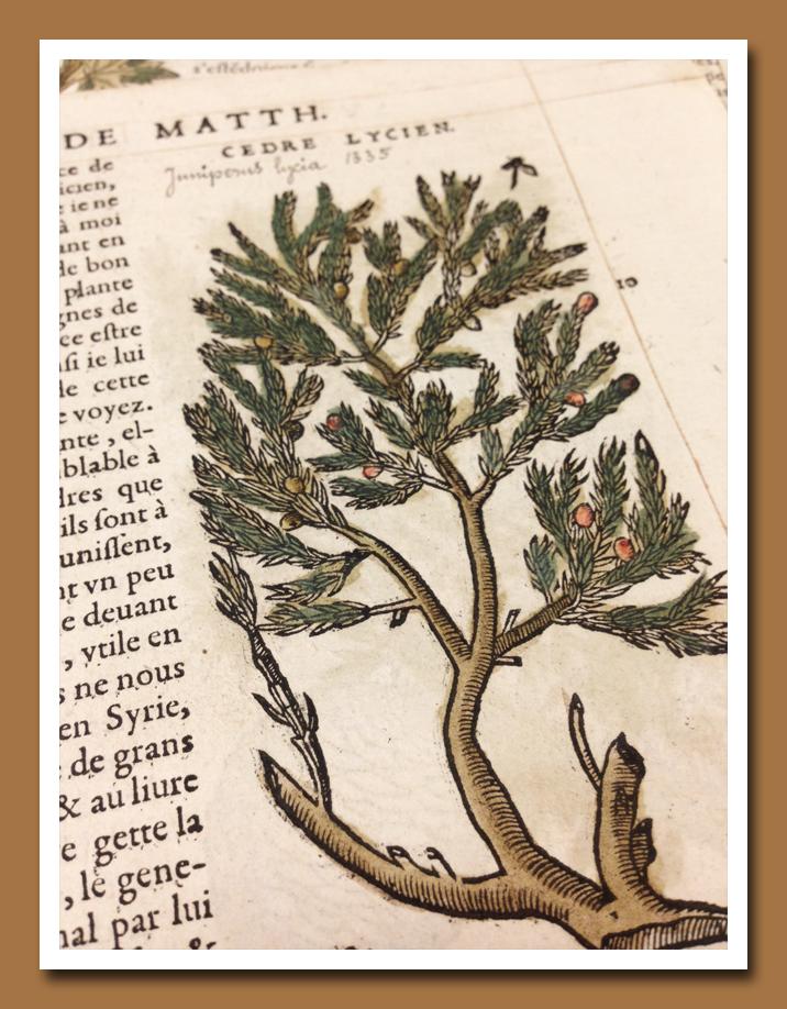 1500 Botanical C