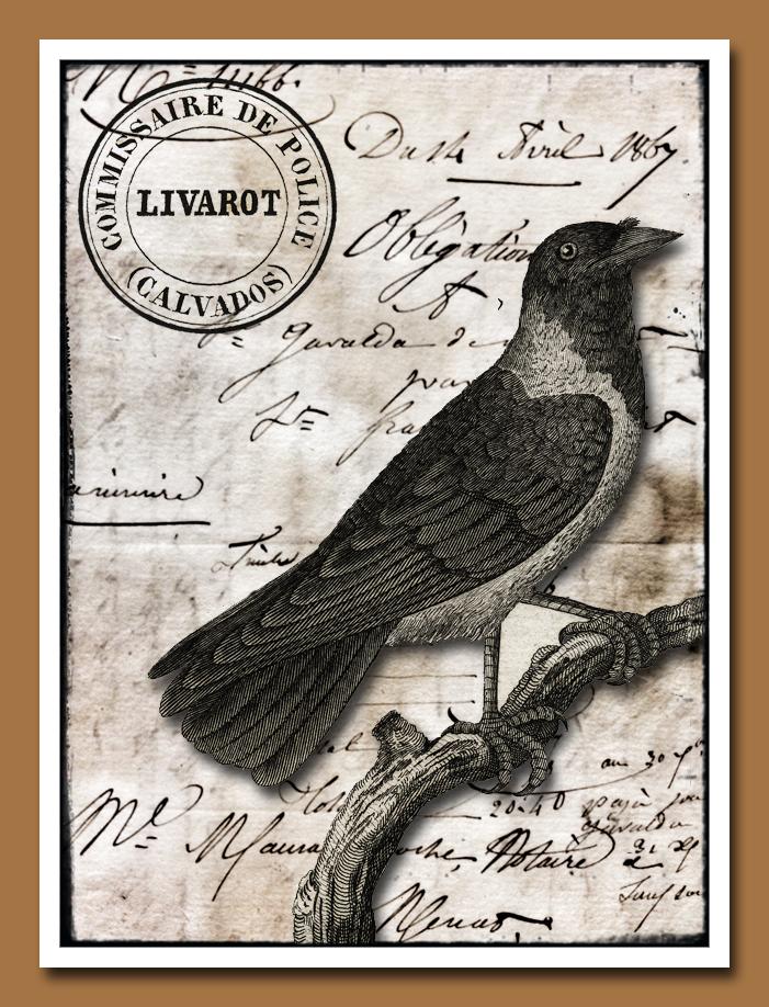 Crow Livarot