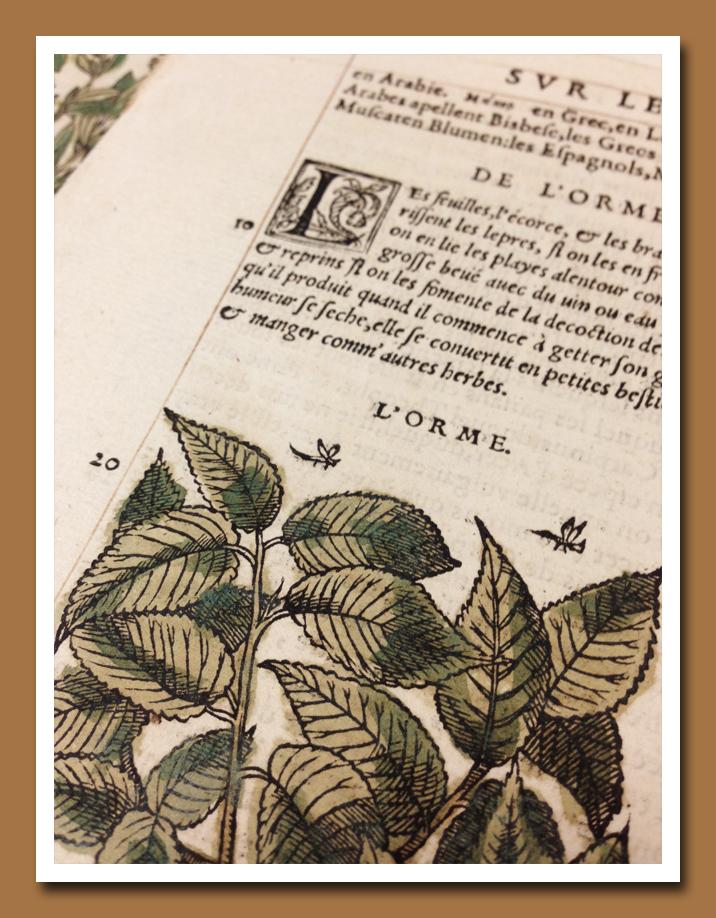 1500 Botanical A